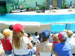 Luki, Alice, Lauren and Henry find the seal show distinctly unfunny.