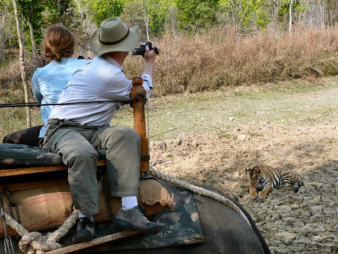 Alice and Andrew on elephant back photographing a 3-year old female in Kanha Tiger Sanctuary